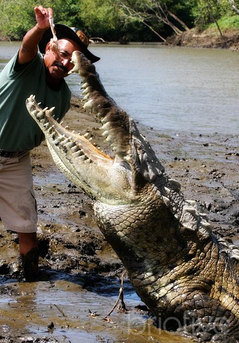 Croc Feeding - Costa Rica